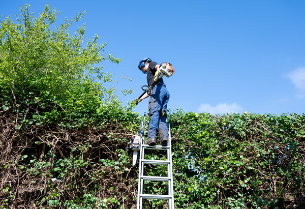 Arborist standing on ladder with long reach trimmers