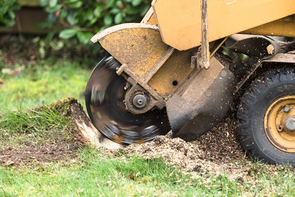Stump Removal and Grinding
