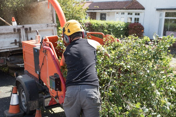 gardeners trimming hedgerow
