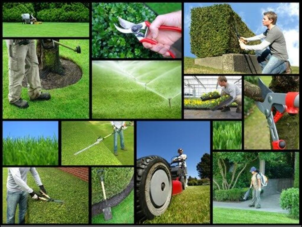 garden and landscaping in Rooksley